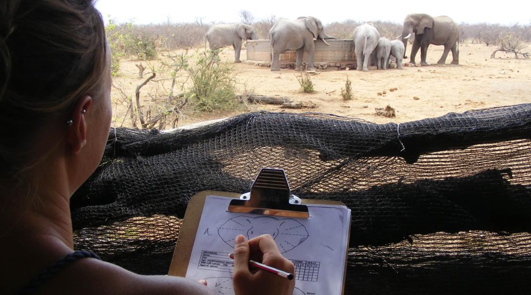 Conservation volunteers taking notes on elephants in South Africa, Africa